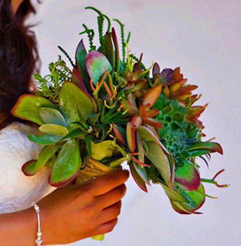 a fleshy  plant.jpg